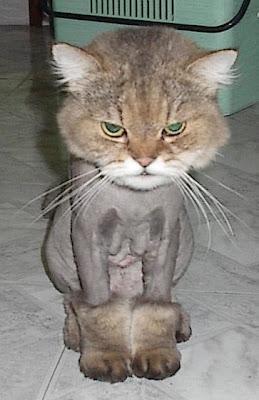 cat in the hat full movie
