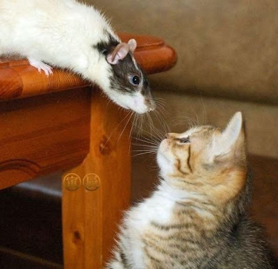 Funny Cats and kitten Pics