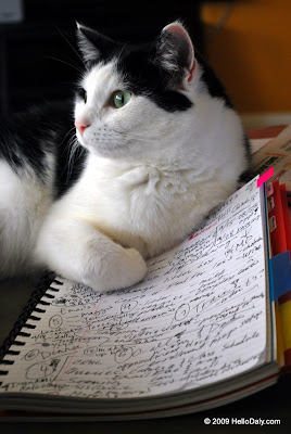 cat to-do list