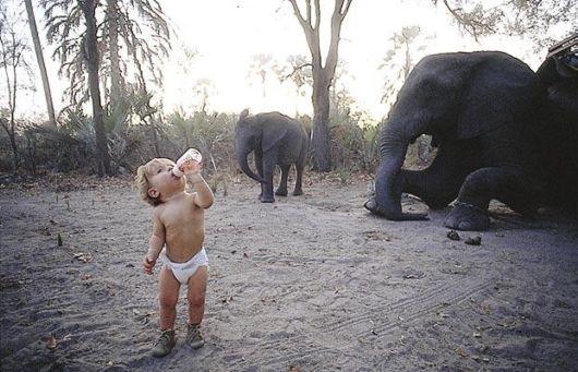 animales salvajes de africa fotos - África Safari Siluetas De Animales Salvajes En 123RF