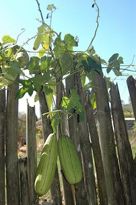 http://1.bp.blogspot.com/_yTBL91TjrB8/TNYgpv3xkHI/AAAAAAAAACE/dzWxoowic2M/s1600/cultivo-de-bucha-vegetal.jpg