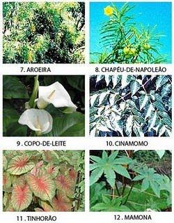 Gatinhos Para Ado O Rio De Janeiro Setembro 2012