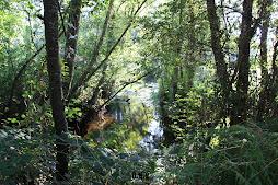 rio Ulla -Ponte Merced
