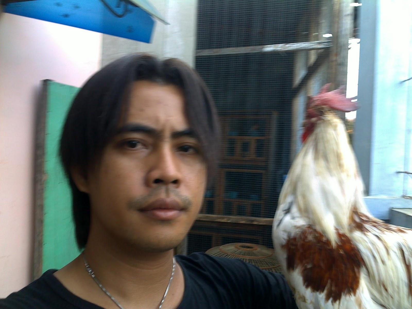 Indikator forex kandang ayam aduan