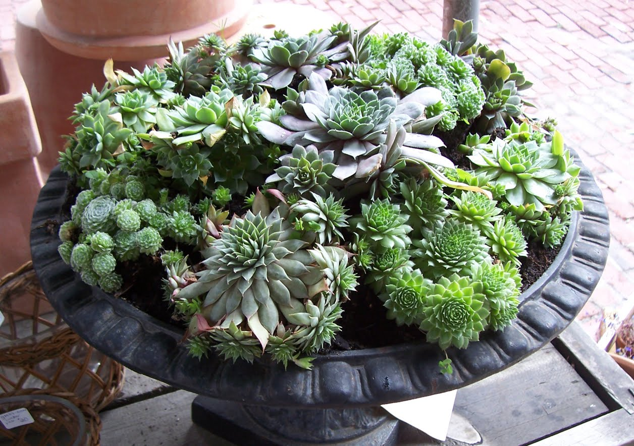 Martha Moments Succulents In Containers