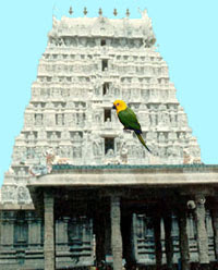 Parrot and Arunachala Tower