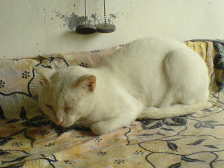 Laguna sick cat
