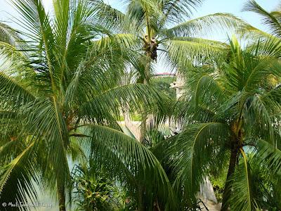 Sentosa Singapore Photo 14