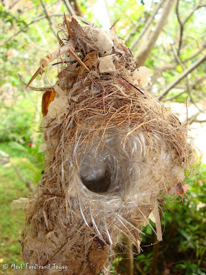 Bird's Nest Photo 1