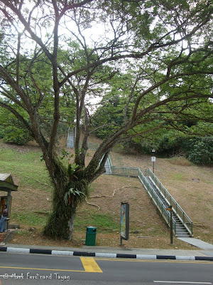 Mount Faber Singapore Hiking Photo 4