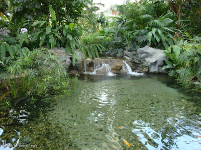 Yakult Rainforest Discovery Pond Photo 1