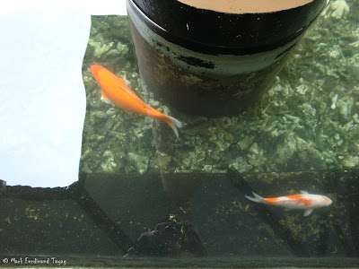Bintan Lagoon Resort Koi Pond Photo 5