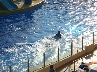 Ocean Park Live Dolphin Show Photo 5