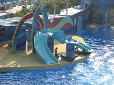 Ocean Park Live Dolphin Show Photo 8