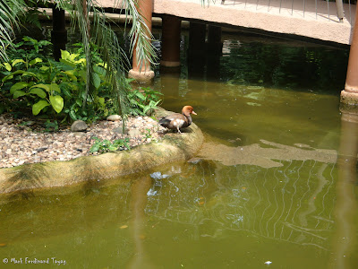 Singapore Jurong Bird Park Photo 5