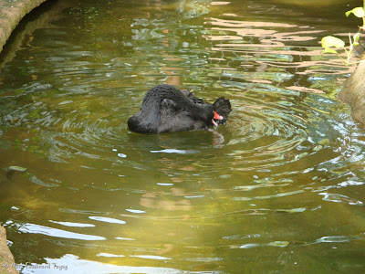 Singapore Jurong Bird Park Photo 7