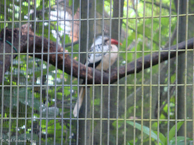 Jurong Bird Park - Heliconia Walk Photo 8