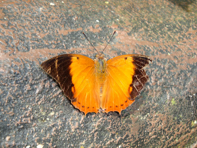 Butterfly Park, Kuala Lumpur Photo 4