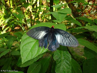 Butterfly Park, Kuala Lumpur Batch 2 Photo 10