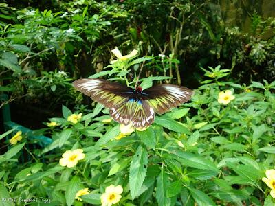 Butterfly Park, Kuala Lumpur Batch 2 Photo 12