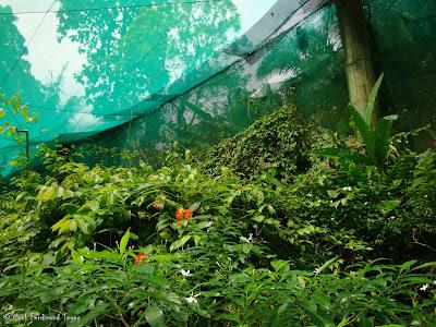 Butterfly Park, Kuala Lumpur Batch 2 Photo 13