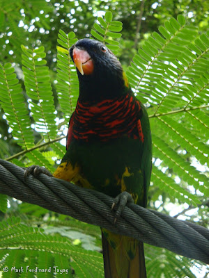 Jurong Bird Park - Lory Loft Photo 10