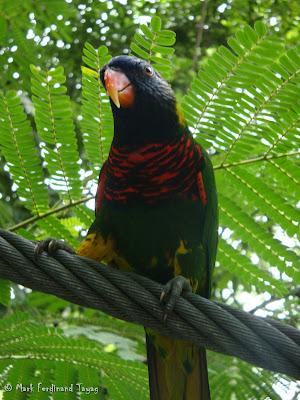 Jurong Bird Park - Lory Loft Photo 10