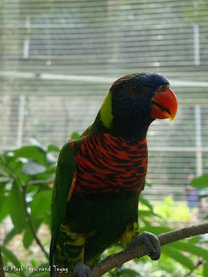 Jurong Bird Park - Lory Loft Photo 12