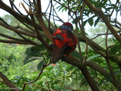 Jurong Bird Park - Lory Loft Photo 3