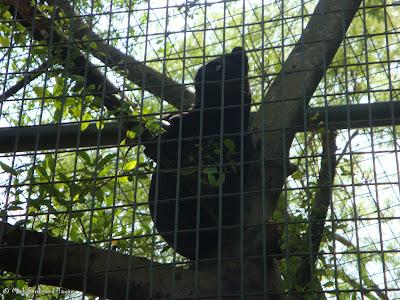 Sunway Lagoon - Wildlife Park Batch 2 Photo 3