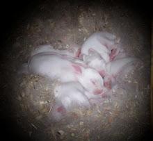 Sunny's Bunnies
