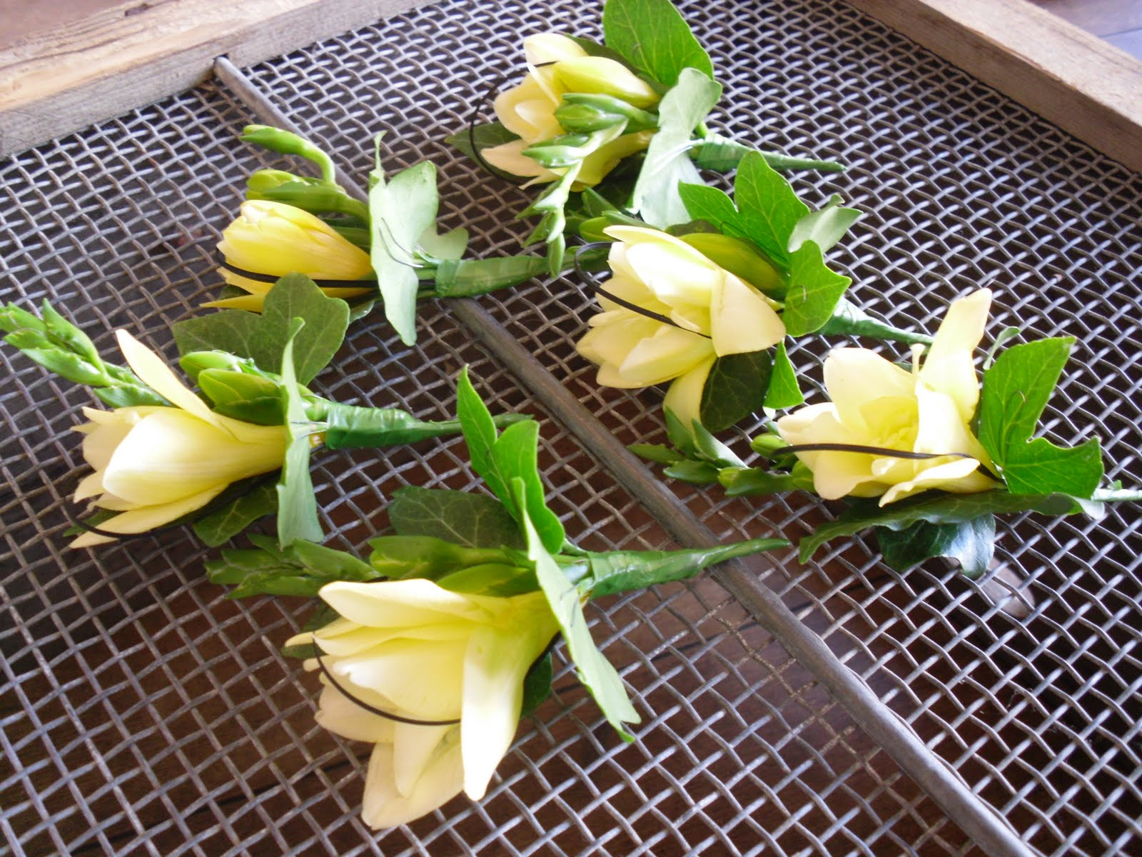Flowers in bloom wedding of vanessa raynor 28th august the male guests wore a buttonhole of lemon freesia with black bear grass loops ivy leaves izmirmasajfo