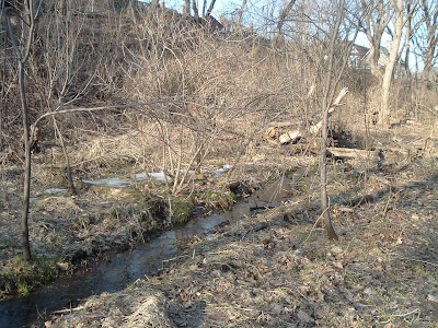 [Photo: babbling brook in Toronto.]