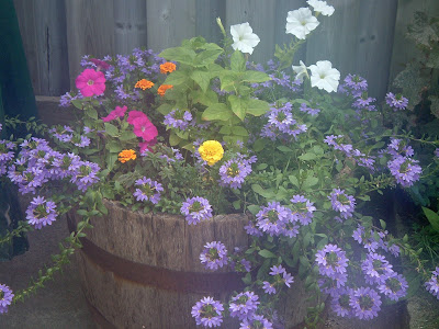 [Photo: half-barrel planter with Scaevola aemula, Petunia 'Carmine Madness', Petunia 'Ultra White', Tagetes patula 'Janie Tangerine', Tagets patula 'Janie Primrose'. The green leaves in the centre are Mirabilis jalapa, which is just starting to form flower buds.]