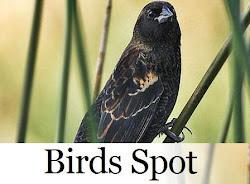 Espaço Birds Spot