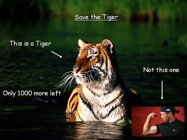 388. Save the Tiger in the woods
