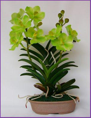 Vanda Orchids Tips