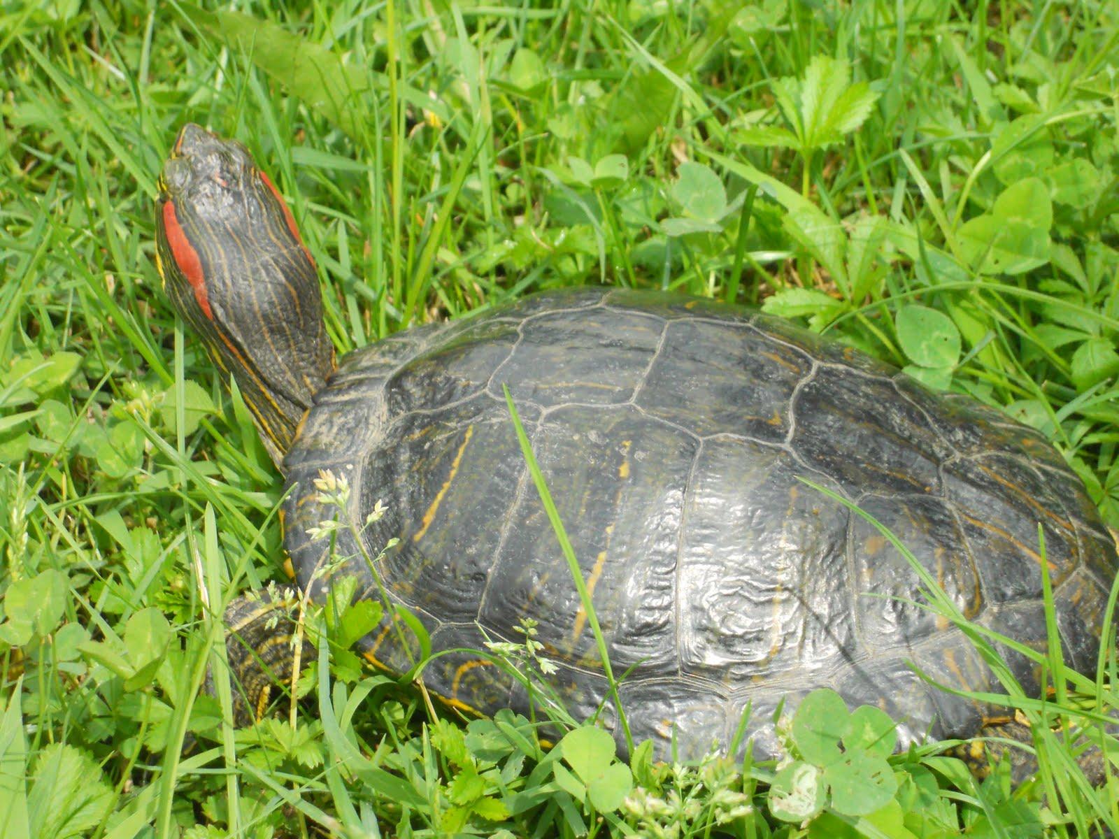 Schizzo di colore a touch of color settembre 2010 for Laghetto tartarughe inverno