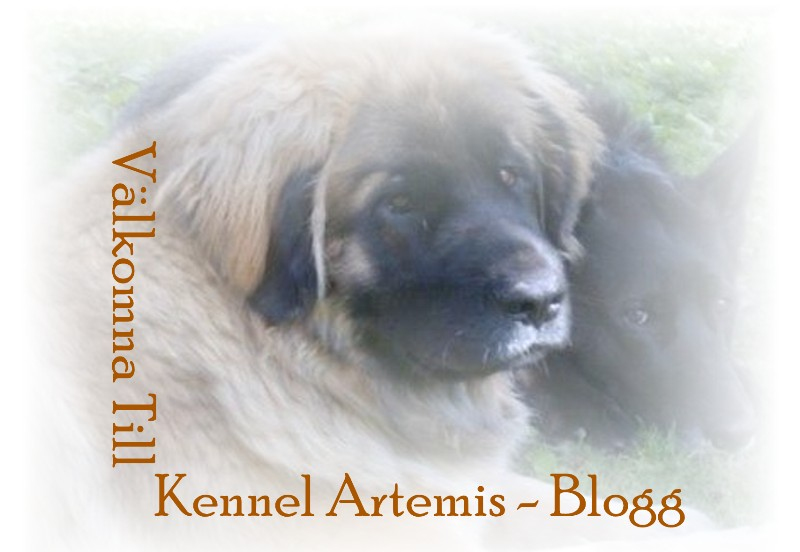 Kennel Artemis Blogg