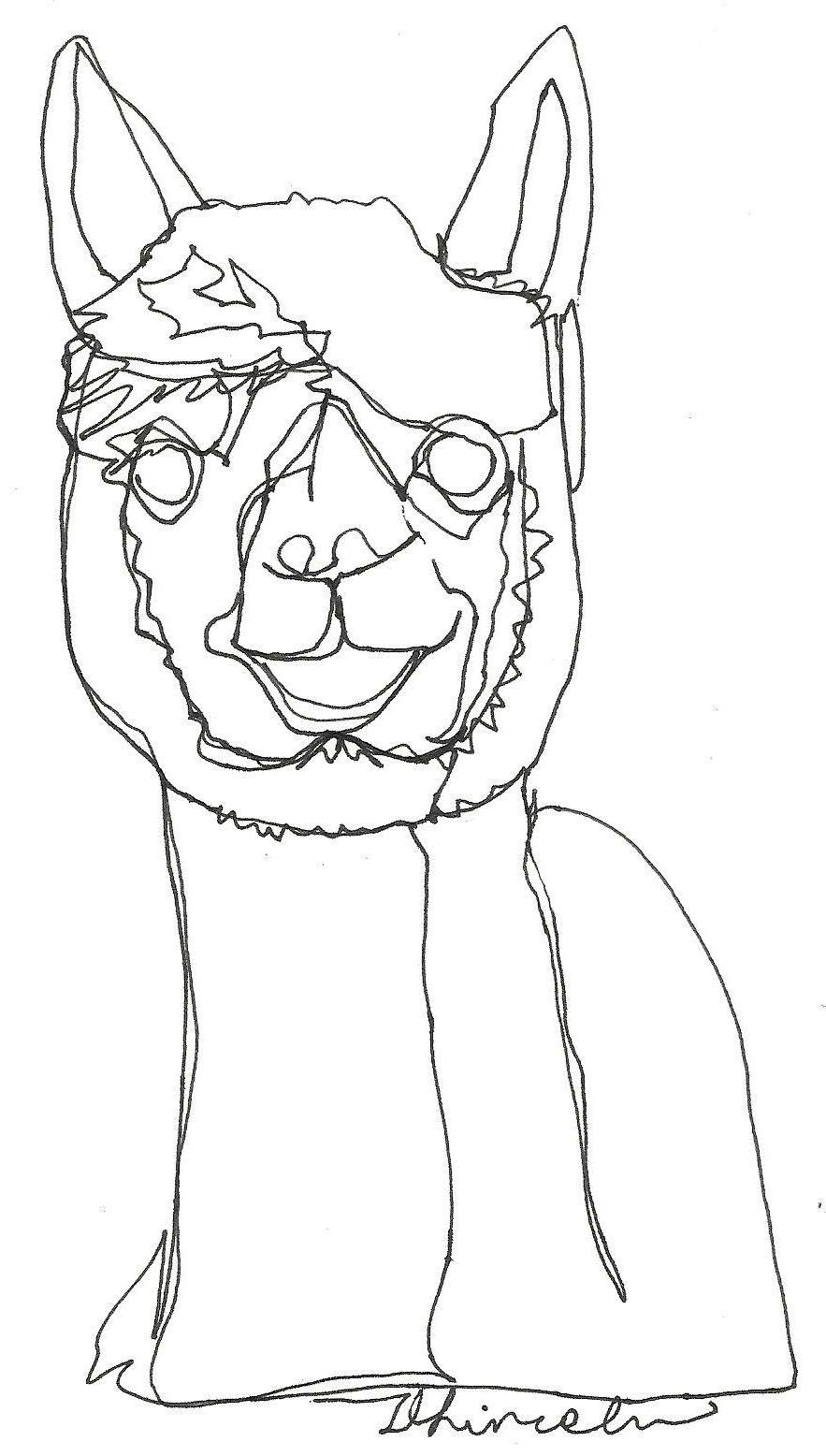 Continuous Line Drawing Faces : Alpaca face drawings