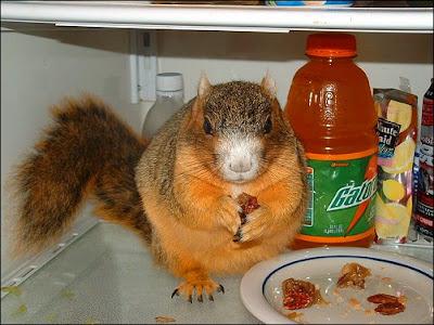 Squirrel pie