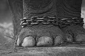 Pelajaran Dari Gajah