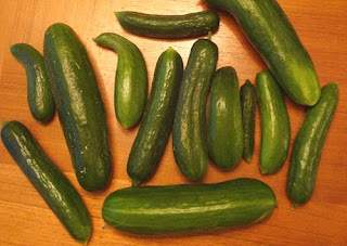 embarraassing amount of cucumbers