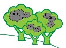 Tree Carbon Offsets