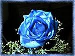 Las rosas de Mªjesus