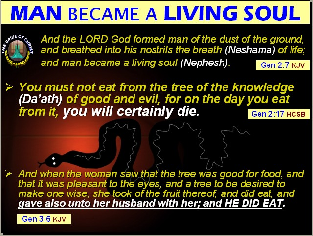 The Bible Explainer Revelator What Happened If Adam Did Not Eat The Fruit Of The Forbidden