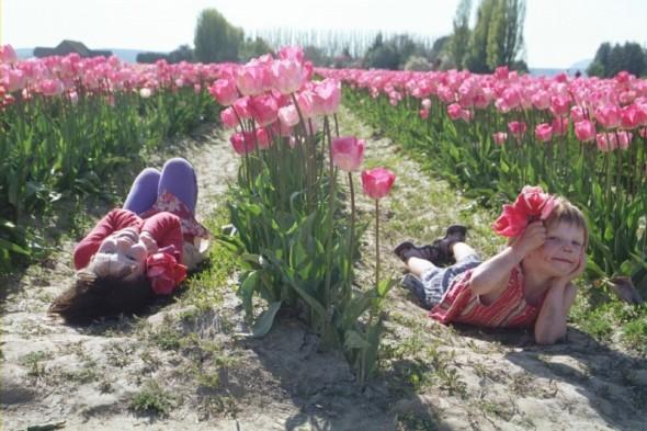 [tulipsy1]