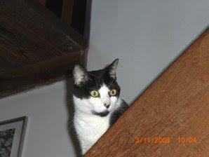 Fufi na escada