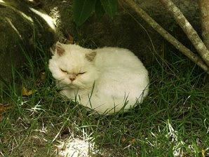 Estopa relaxando no final da tarde