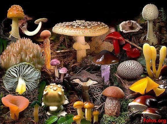 Ciencias Naturales; Los Seres Vivos: FOTOS * Reino Hongo *